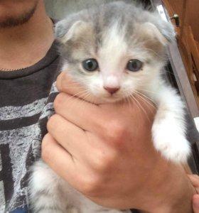 Котёнок ❤️мальчик,1 мес ,