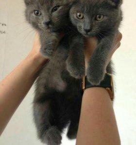 Котята-мальчики и девочки