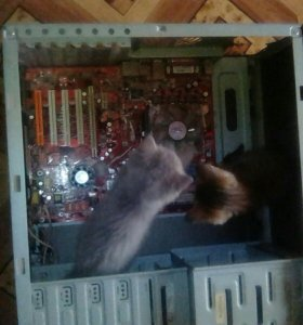 Ремонт и чистка компьютеров и ноутбуков.