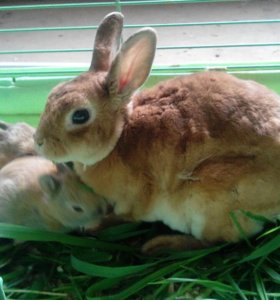Карликовые кролики.