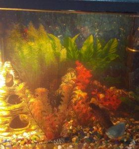 Аквариум 80л с рыбками и со всеми принадлежностями