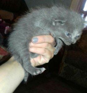 отдам в хорошие руки миленьких котят