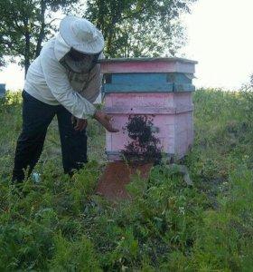 Мёд натурадьный