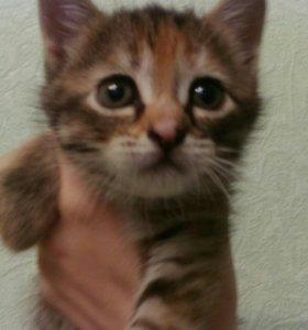 В добрые руки котенка