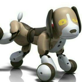 Собака zoomer Бентли