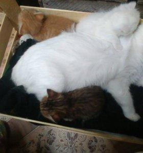 Пристраиваются котятки.