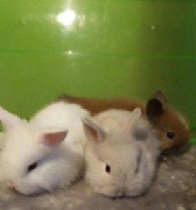 Крольчата мини