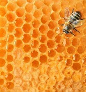 Мед пчелиный с собственной пасеки Воронежской обла