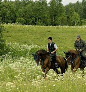 Конные прогулки в поля