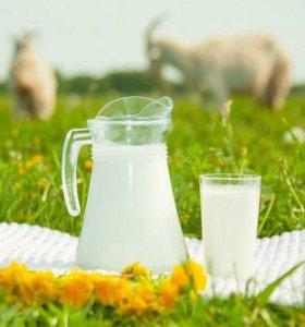 Молоко козье, творог, сливочное масло