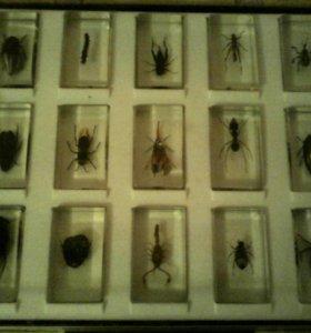 Коллекция насекомых