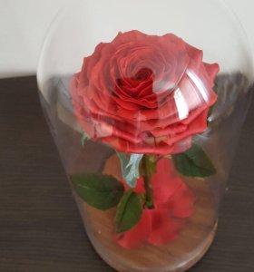 Продаётся цветок в колбе