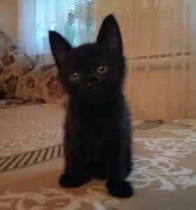 Отдам котенка в добрые руки!!!!!