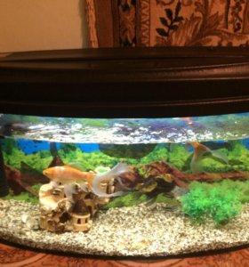 Продаю аквариум в рыбками