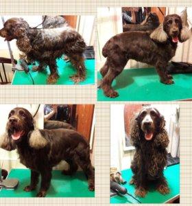 Мытье,стрижка собак и кошек