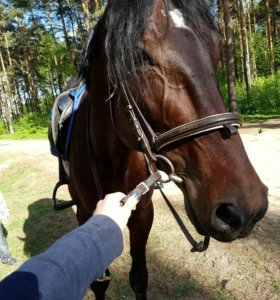 Ослик и лошадь в аренду