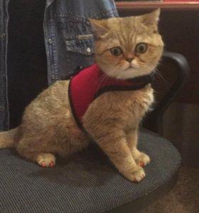 вязка кошка