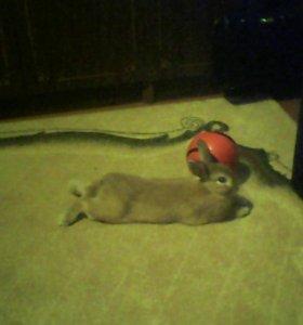 Кролик Кузя