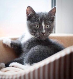 Котенок Томас ищет дом!