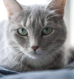 Кошка Марго ищет дом!
