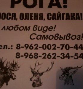 Рога дорого!!!Лося Оленя Сайгака!в любом виде.