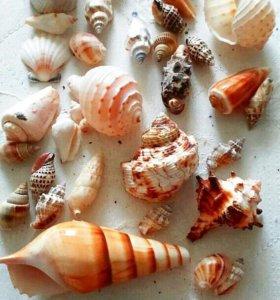 Продам морские ракушки