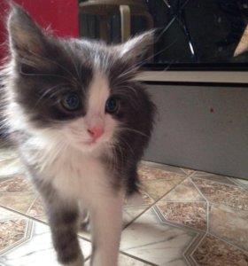 Кот в дар