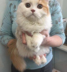 Продам котят породистых с паспортом