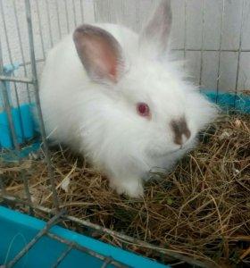 Кролики декоративные.Звоните 9511437578