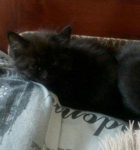 Милые котята в хорошие руки,к лотку приучены