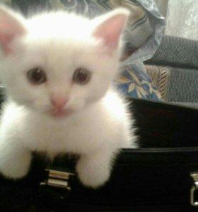 Отдам в хорошие руки(кот).. срочно уезжаем
