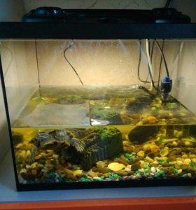 Черепаха и террариум