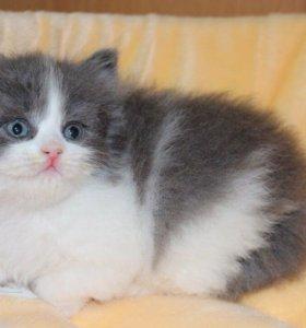 Котенок в добрые руки Герда, котенок в дар
