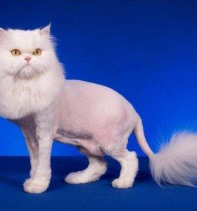 Гигиеническая стрижка котов и кошек