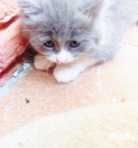 Подарю котёнка