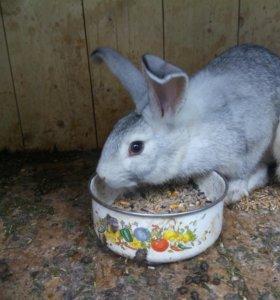 Кролики. Цена за одного