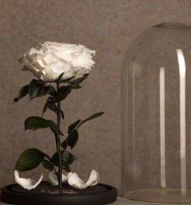 Роза 🌹 в колбе