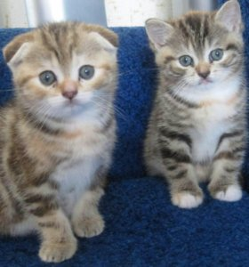 Две кошечки, рождены 12 апреля.