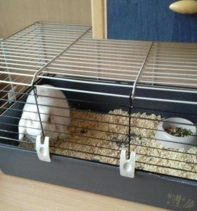 Кролик и клетка для неё