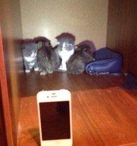 Кошка с котятами все веслоушки