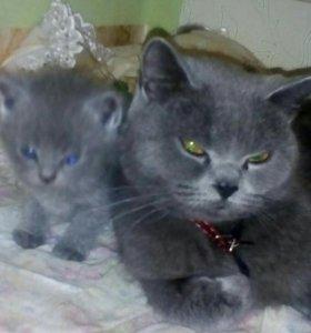 Котики 🐈