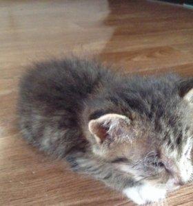 Котёнок (маленький всего около 1 месяца)