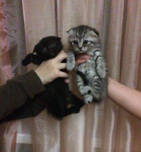 Котята 2 девочки