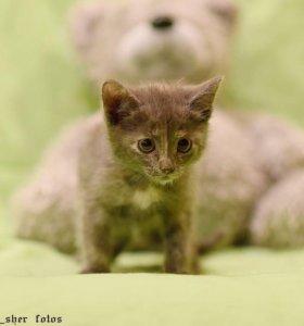Безумно красивые котята в дар