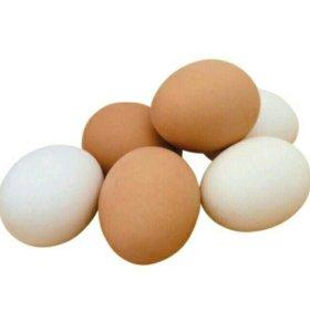 Яйцо куриное (деревенские)