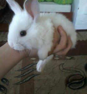 Кролики-Бабочки