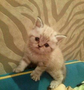 Кошечки - ласкушечки