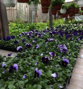 Рассада: однолетние растения, овощная рассада
