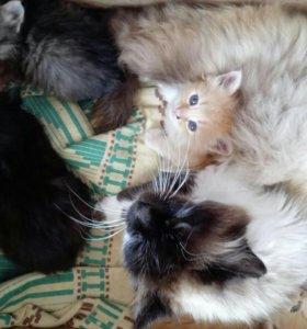 Кому нужны котятки?обращайтесь)