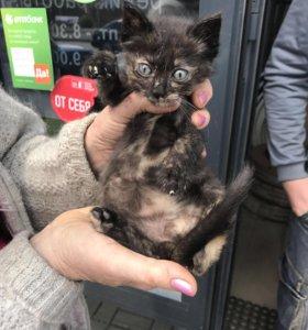 Котёнок в добрые руки , бесплатно
